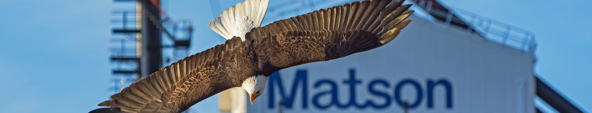 An eagle soars past Matson operations in the Alaska service.